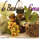 Flores de Bach, Consulta Flores Bach, Flores Bach